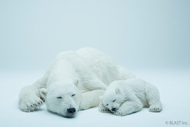 動物美術品「Animals As Art」第一弾:シロクマ親子。価格は1,340万円、受託受付開始。