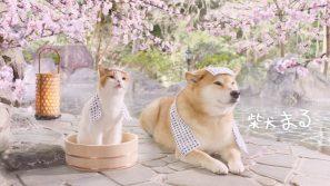 「まると春旅」篇