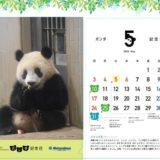 今月はもぐもぐ!松坂屋上野店の月ごとにデザインが変わる「パンダ記念日カレンダー入りクリアファイル」プレゼント